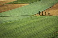 Особенности заключения договора аренды земельного участка сельскохозяйственного назначения или его доли в 2018 году