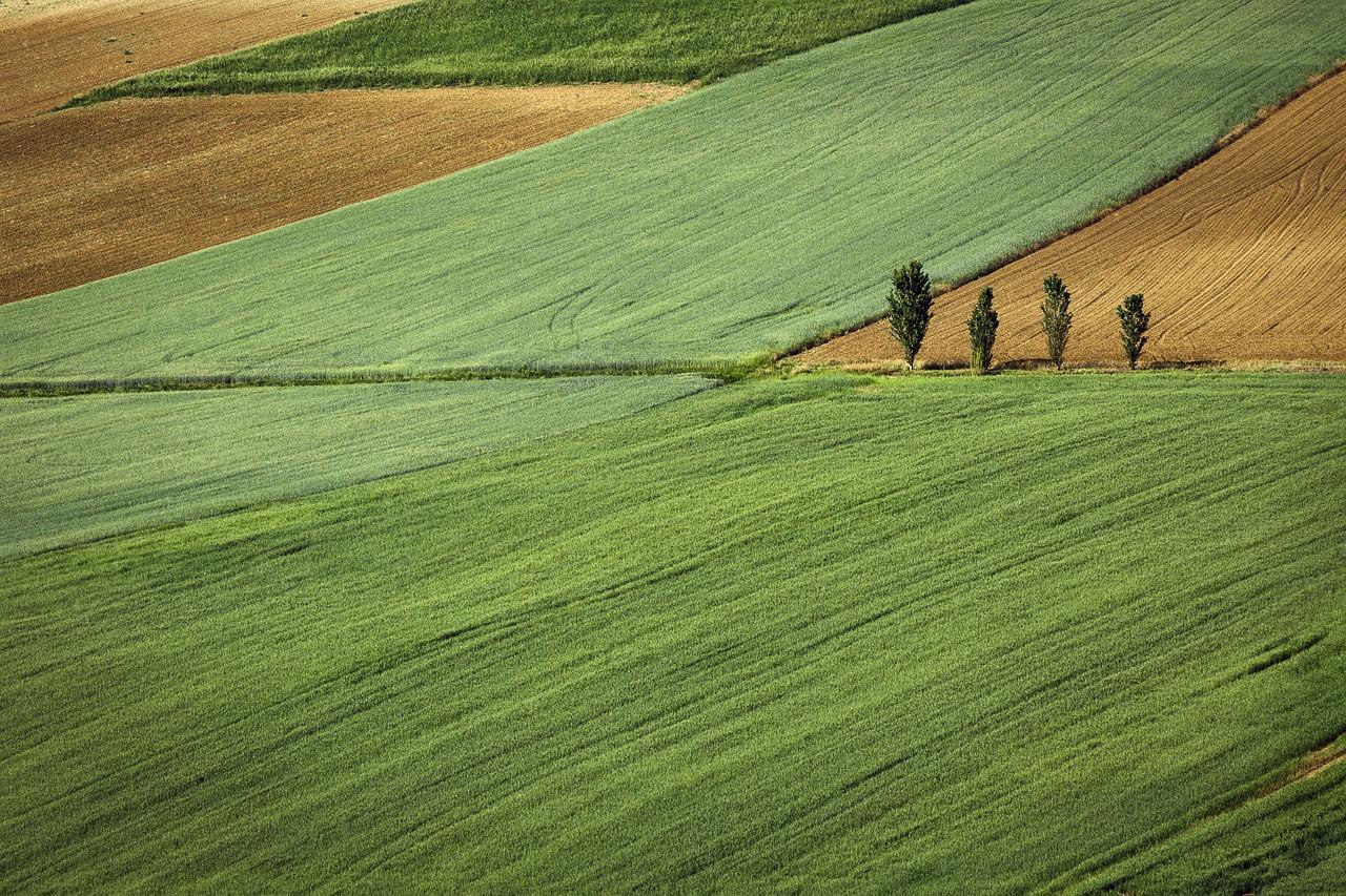 Аренда земли сельхозназначения
